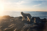 sophie at beach